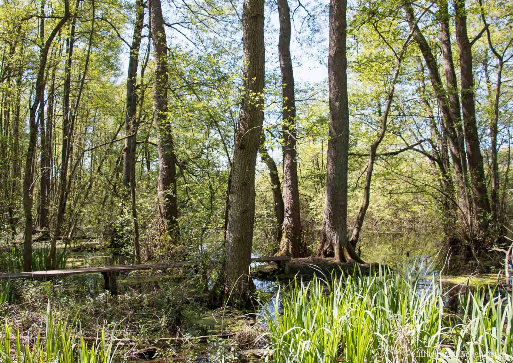Weingartener Moor-3